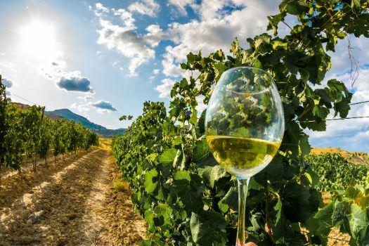 Copas de cristal fino para vino